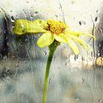 こどもを守りたい!梅雨時期に急増するダニの退治方法7選