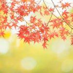 秋のあせもは冷やすと治る?かゆみや痛い場合の治療法