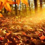 秋冷の候とはいつ頃の時期?意味や読み方など、挨拶文例も紹介